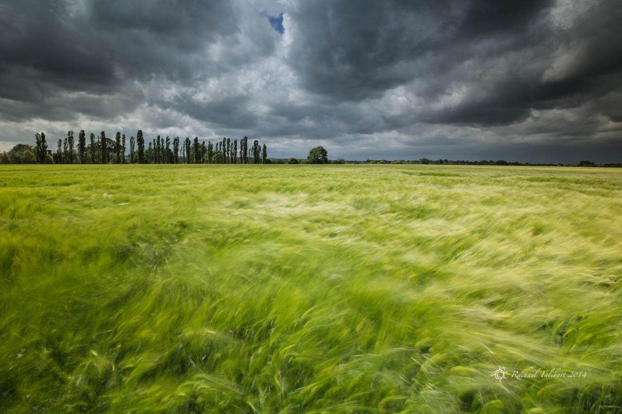 Three Farms Meadows